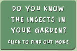 Do you know the insects in your garden?